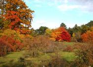 Herbstliche Färbung im Arboretum